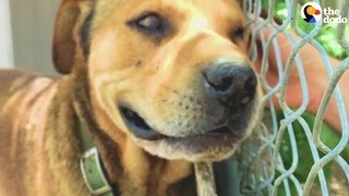 Dog Who Lived On A Chain For A Decade Is Set Free