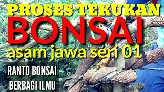 belajar-tekukan-bonsai-asam-jawa-seri-01