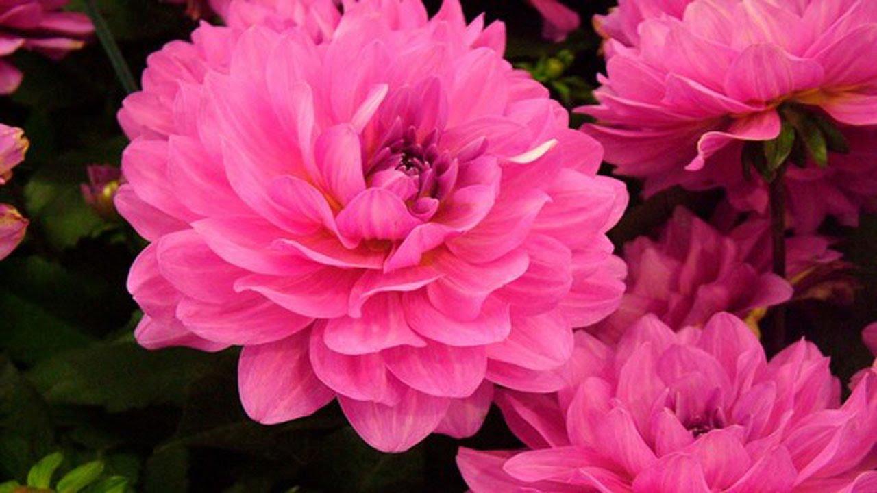 World s most beautiful flowers image wallpapersjpg 10 most beautiful flowers in the world you izmirmasajfo