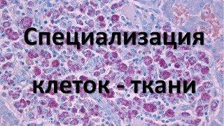 2. Ткани человека (8 класс) - биология, подготовка к ЕГЭ и ОГЭ 2019