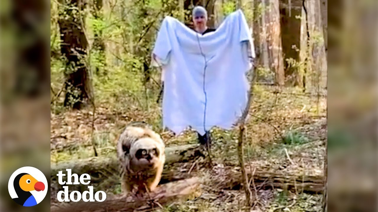Fallen Baby Owl Rescued by Family | The Dodo