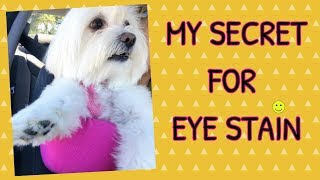 HOW TO CLEAN TEAR STAINS, White DOGS, Coton de Tulear I Lorentix