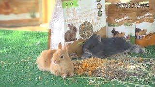 NATURALISS – Naturalna karma dla królika młodego i dorosłego