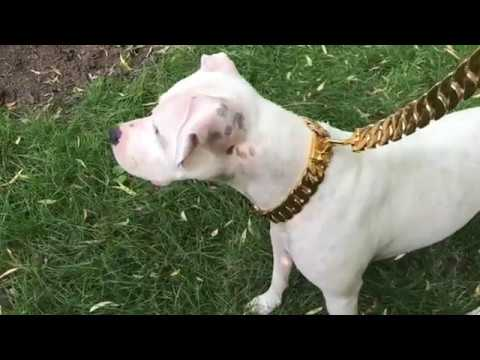 BiG DOG CHAINS  f0254c6b274