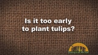 Q&A - When to Plant Tulips