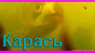 32- Поклевка карасика под водой. Crucian.  Рыбалка, ловля карася на поплавок. fishing(Поклевка карасика под водой на поплавочную удочку .….((Мой канал- это (в основном) канал ЛЮБИТЕЛЯ-рыболова..., 2014-08-21T13:22:45.000Z)