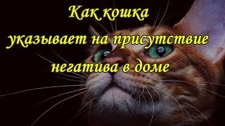 Download КАК КОШКА УКАЗЫВАЕТ НА ПРИСУТСТВИЕ НЕГАТИВА В ДОМЕ   The cat and the evil spirit Mp3 and Videos