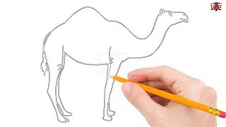 How to Draw a Camel Step by Step Easy for Beginners/Kids – Simple Camels Drawing Tutorial