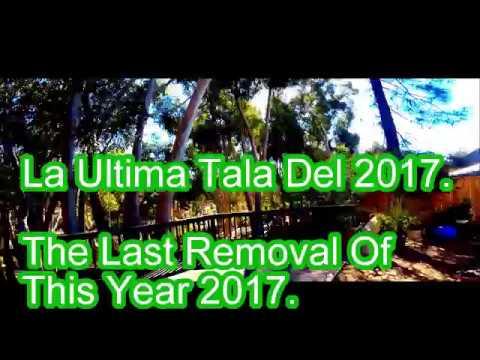 La Ultima Tala Del 2017/the last removal tree of thes year 2017/gopro videos/SRT/Single Line/