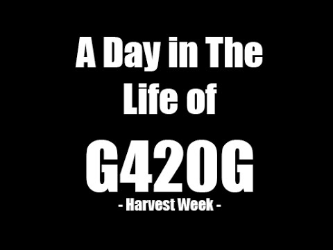 Day In The Life Of A Grower - Harvest Week