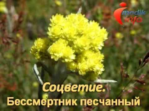 Декоративные травы и злаки, злаковые Фото, названия, уход