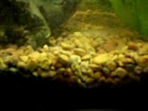 Bugs In My Aquarium Youtube