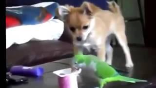 Смешное видео про животных самые смешные и нелепые моменты из их жизни