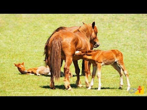 Clique e veja o vídeo Curso Reprodução de Cavalos CPT