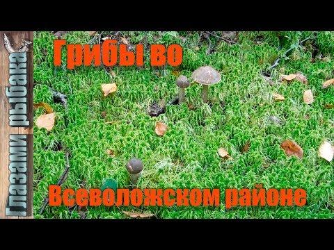 Вопрос: Куда сдавать грибы и ягоды в СПБ и Ленинградской области Какие цены?
