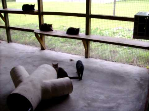 Spaymart Cat Sanctuary Picayune Mississippi