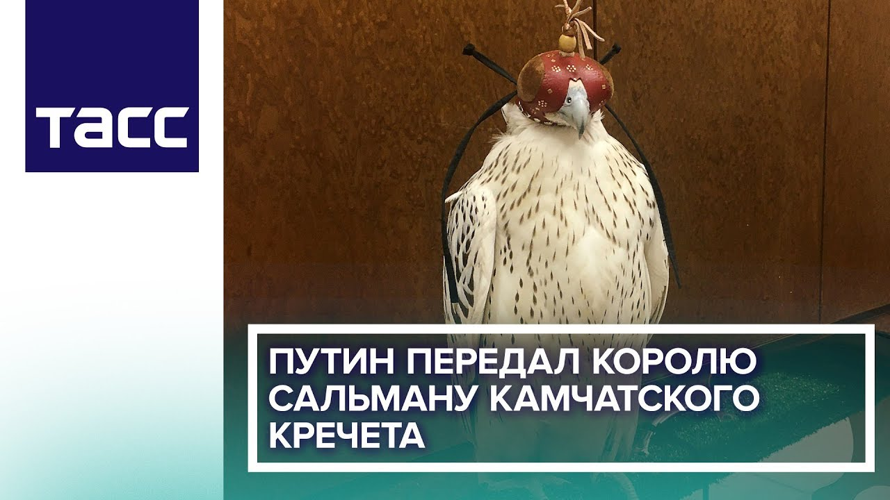 Путин передал королю Сальману камчатского кречета