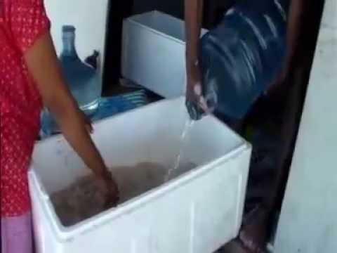 4 Membuat Plankton Tambak - Budidaya Udang Vaname Intensif Plastik Mulsa