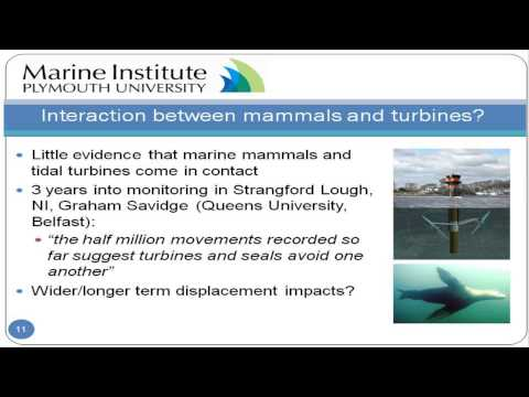 The environmental impact of marine renewable energy