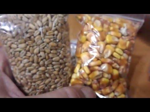 Просо: купить просо, продажа проса оптом — Agro-Ukraine