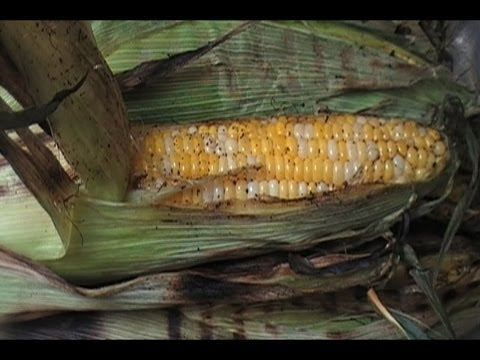 how-to-make-grilled-corn-w/-spiced-butter