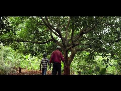 Kenya's avocado exports