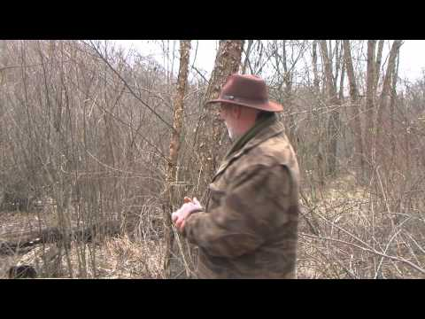 Useful And Medicinal Trees Of The Eastern Woodlands River