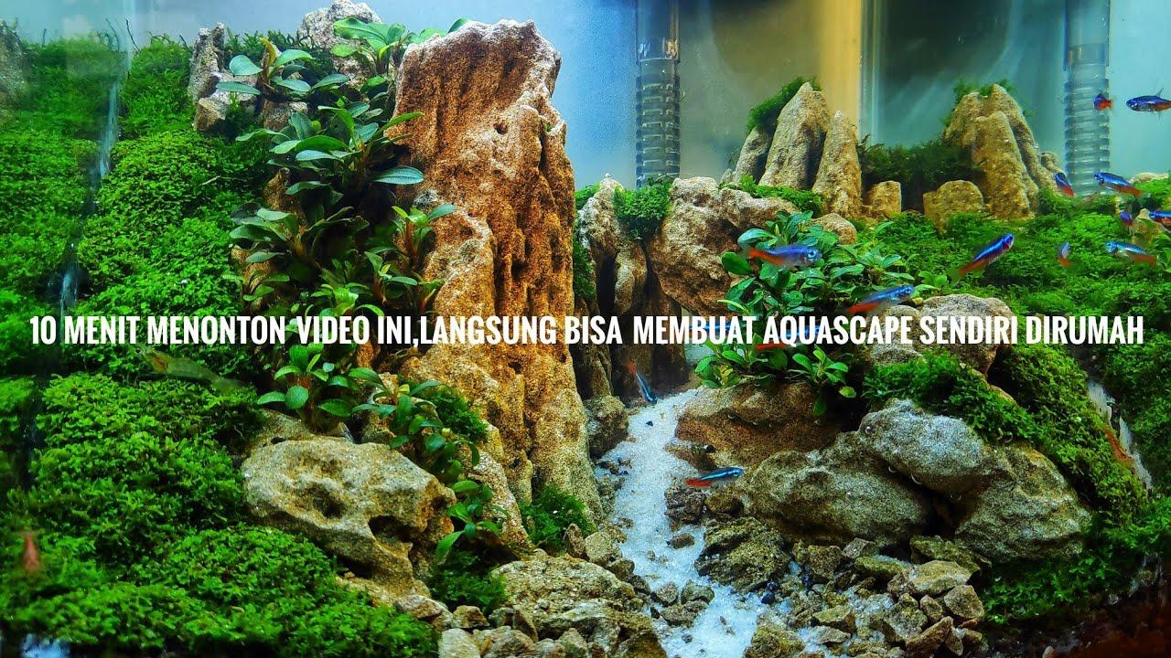 #115 Cara Membuat Aquascape untuk pemula paling mudah ...