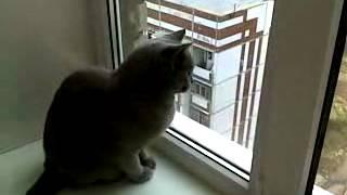 смешной кот ругается на птиц