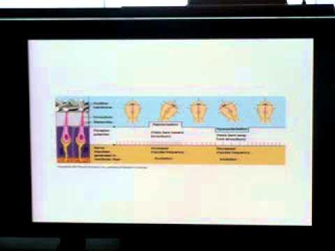 Applied anatomy & physiology of vestibular system 2 - YouTube