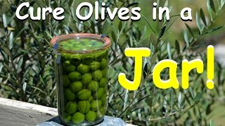 How to Cure Olives in a Jar - Homegrown DIY