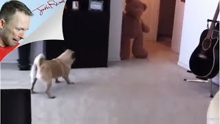 Teddy Bear  Pug Prank  Gone Wrong