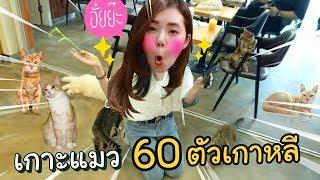 หนีนาซ่าไปเกาะแมว 60 ตัวที่เกาหลี
