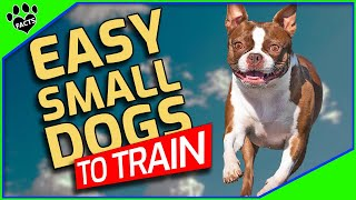 Top 10 Easiest Small Dogs To Train