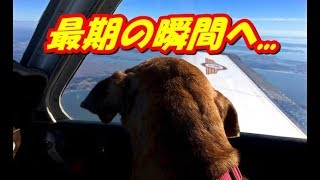 病気で長く生きられない犬。飛行機に乗り最期の家へ...