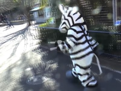 Raw Japan Zoo Holds Escaped Zebra Drill