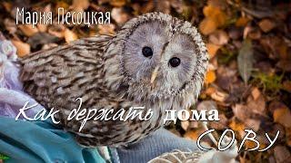 Как держать дома сову ❉ Мария Песоцкая