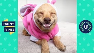 TRY NOT TO AWW! Funny and Cute Animals Videos Compilation 2018