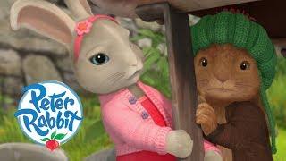 Peter Rabbit - Hide and Seek   Cartoons for Kids