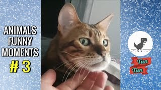Khoảnh khắc hài hước của động vật #3 | Animals Funny Moments