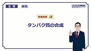 【高校生物】 細胞18 タンパク質の合成(14分)