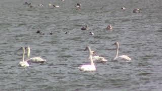 Моя весенняя видео охота My spring video hunt
