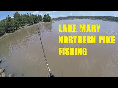 Arizona Fishing   Northen Pike At Lake Mary