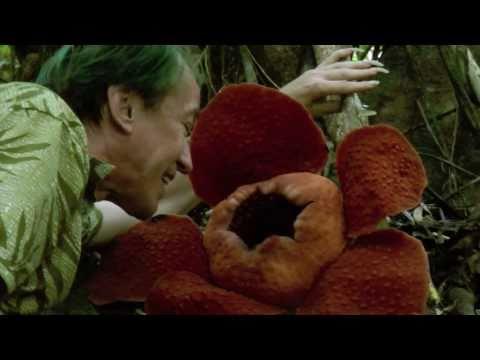 RAFFLESIA TUAN-MUDAE with PATRICK BLANC
