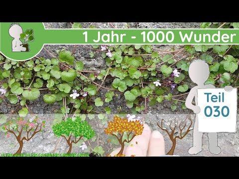 """1 Jahr - 1000 Wunder - Teil 030 (17.04.2019) - Wildpflanzen & Bäume Bestimmen """"Stadt-Ritzen & Fugen"""""""