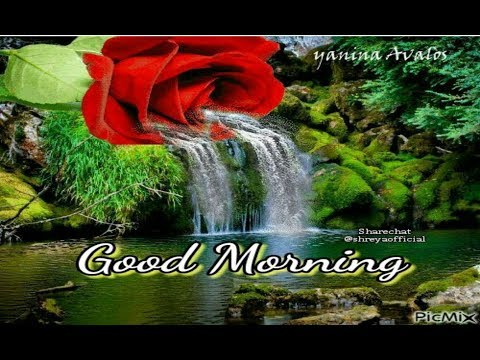 Good Morning Video Whatsapp популярные видеоролики