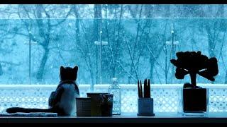 [petlog 16] 함박눈을 대하는 #먼치킨 #고양이 와 #강아지 들의 자세