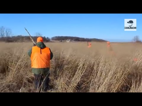 Pheasant Hunting with Chaos - ft. Beretta A400 Xtreme