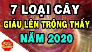 7 Loại Cây Kéo Tài Lộc Ùn Ùn Về Nhà, Bình An Phát Tài, Phát Lộc, Nhất Định Phải Trồng Năm 2020