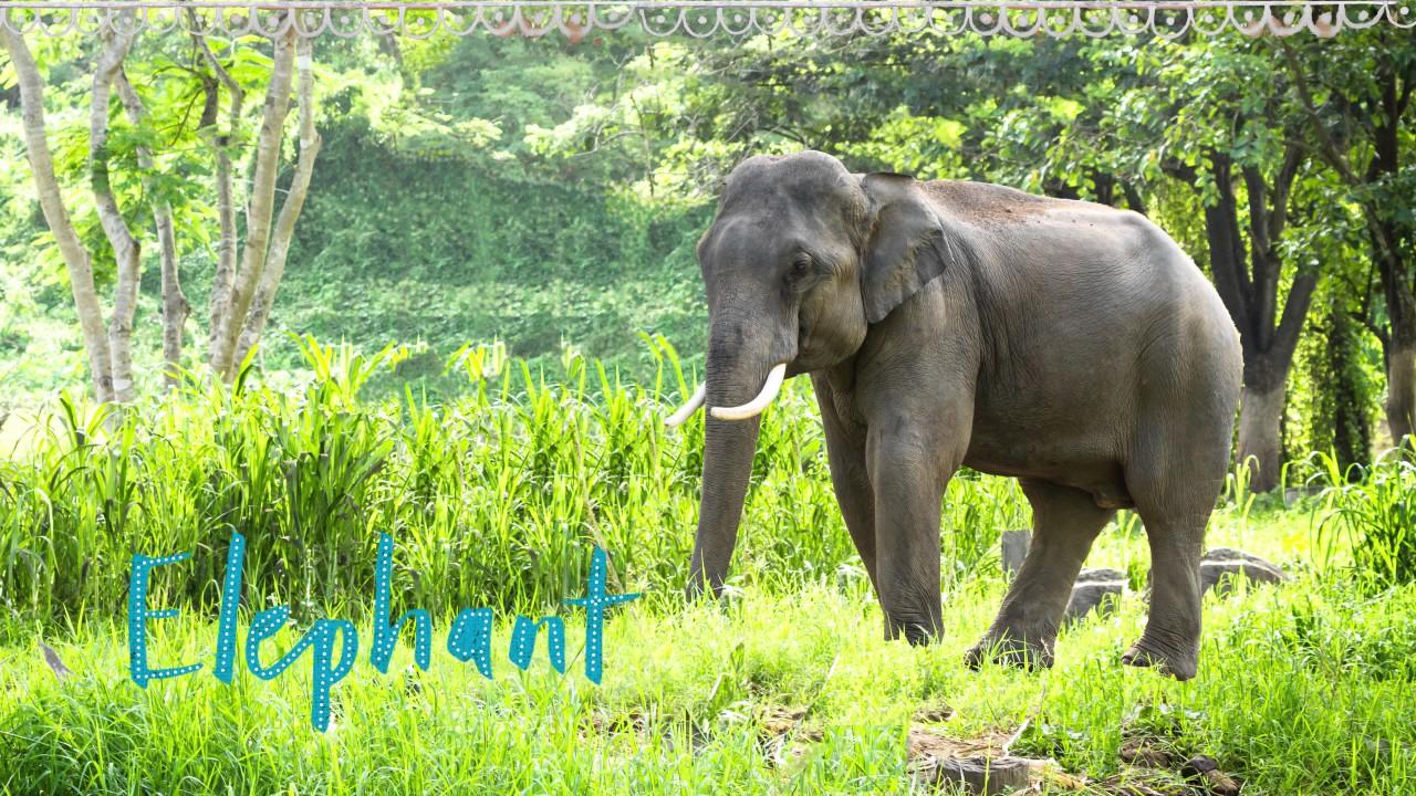Animals of the Sundarbans
